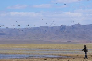 mongolia goose hunt