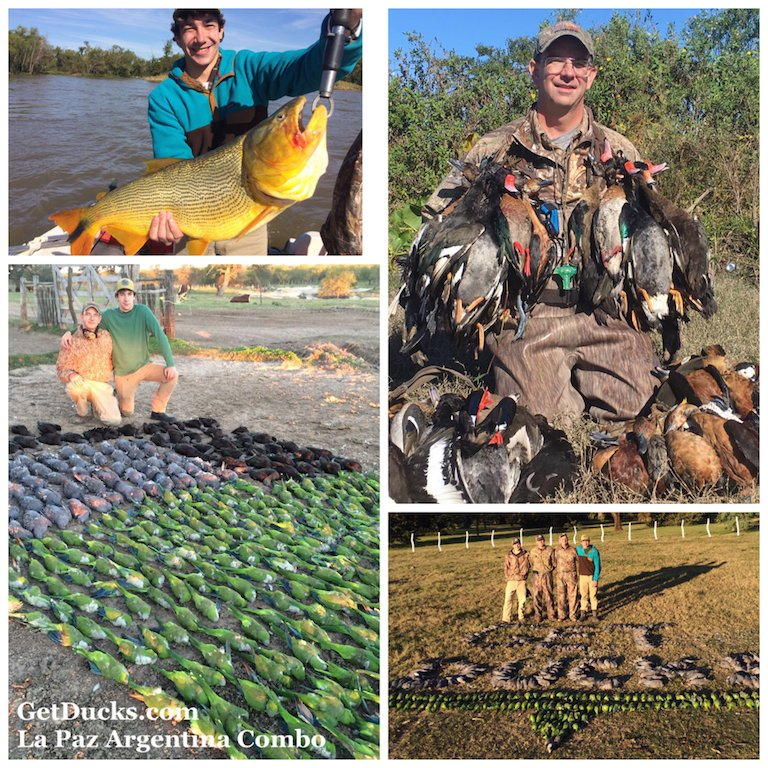 argentina duck hunts