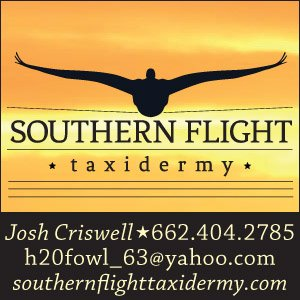 Southern Flight Taxidermy
