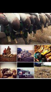 texas goose hunt