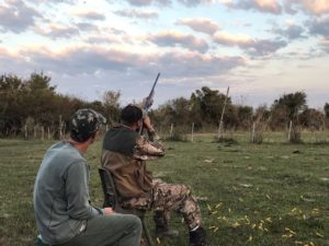 argentina dove hunting