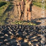 argentina pigeon hunting