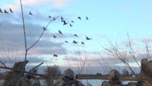 Kansas Goose Hunting
