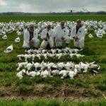 arkansas spring snow goose hunting