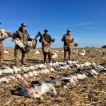 Saskatchewan Canada Goose and Duck Hunting