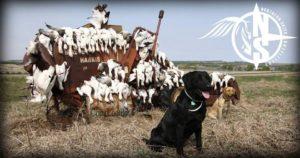 Saskatchewan Canada Goose and Duck Hunting
