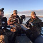 alaska king eider hunting