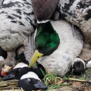 KANSAS DUCK AND GOOSE HUNTING