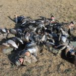 Alberta Canada Duck and Goose Hunting Guides