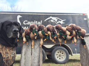 ONTARIO CANADA DUCK HUNTS