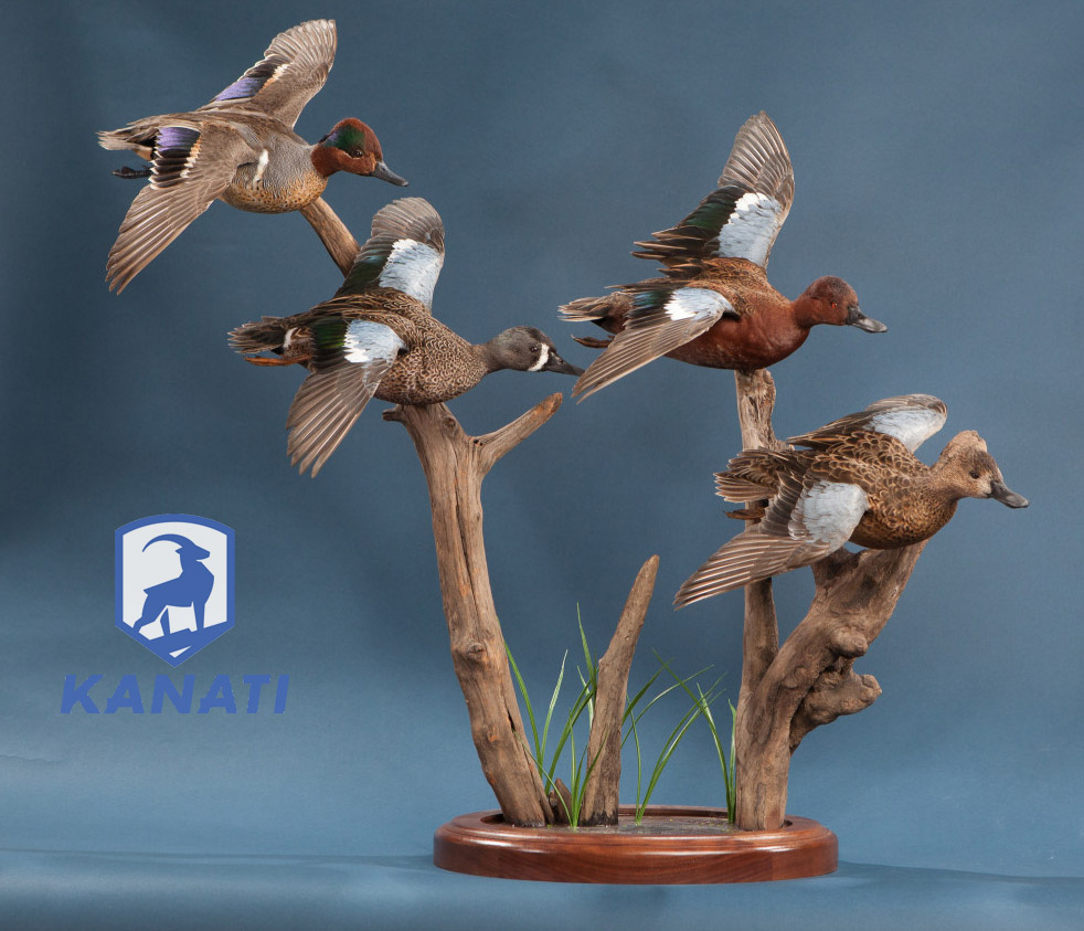 Mexico DUCK HUNTING TAXIDERMY