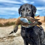 Mexico Duck Hunt Blue Winged Teal