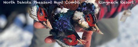 North Dakota Pheasant Hunting Combo