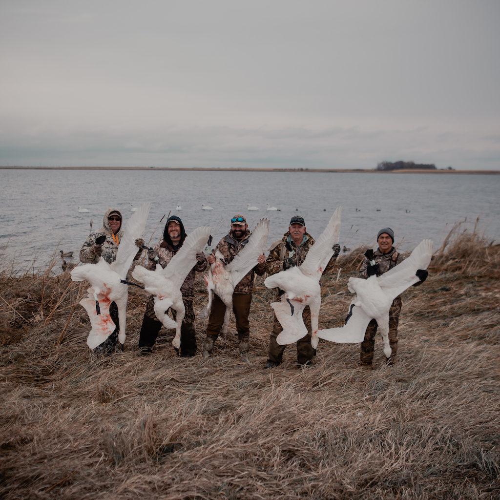 north dakota swan hunt