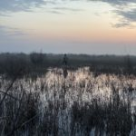 Azerbaijan Duck Hunting Guide