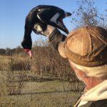 what duck species in argentina duck hunt
